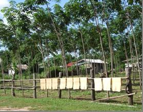 กล่องข้อความ: ลิ้นจี่ นพ.1 เป็นพันธุ์ที่มีความเหมาะสมกับภาคตะวันออกเฉียงเหนือตอนบนของประเทศไทยที่มีความสูงจากระดับน้ำทะเล 140 เมตรขึ้นไป      ปลูกได้ดีในจังหวัดนครพนม หนองคาย เลย สกลนคร มุกดาหาร อุบลราชธานี